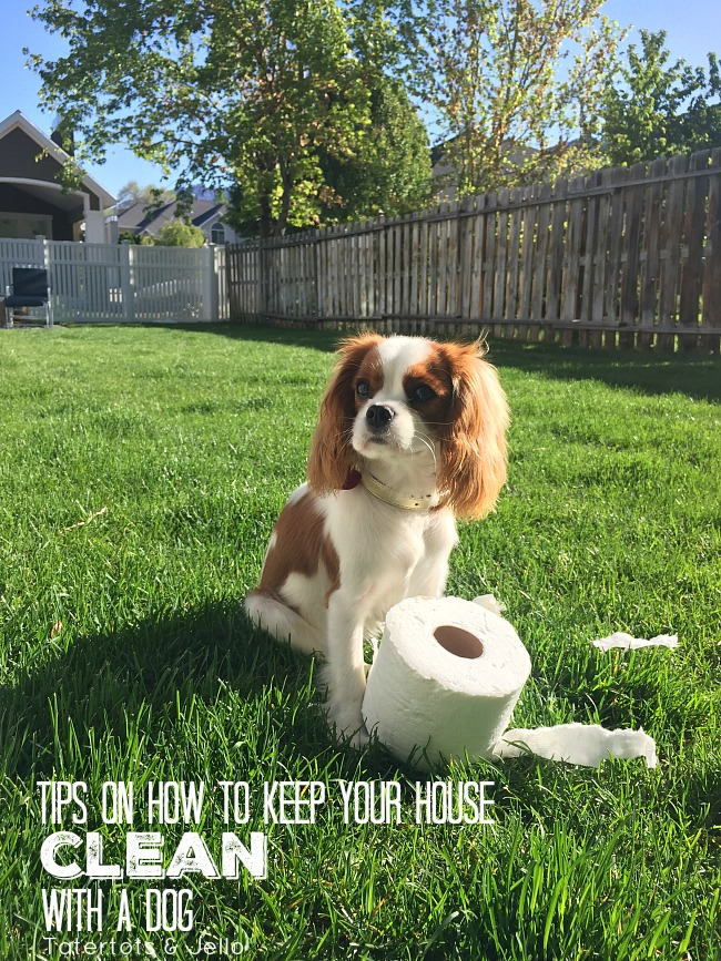 How to keep your house clean with a dog