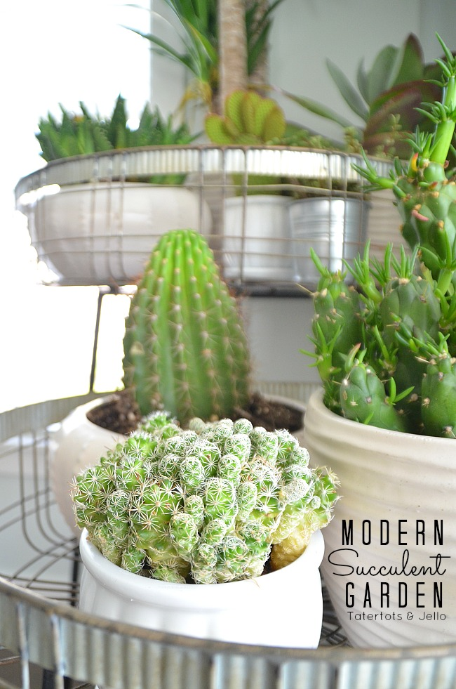 Modern Farmhouse Succulent Plant Stands