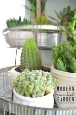 Modern Farmhouse Succulent Garden