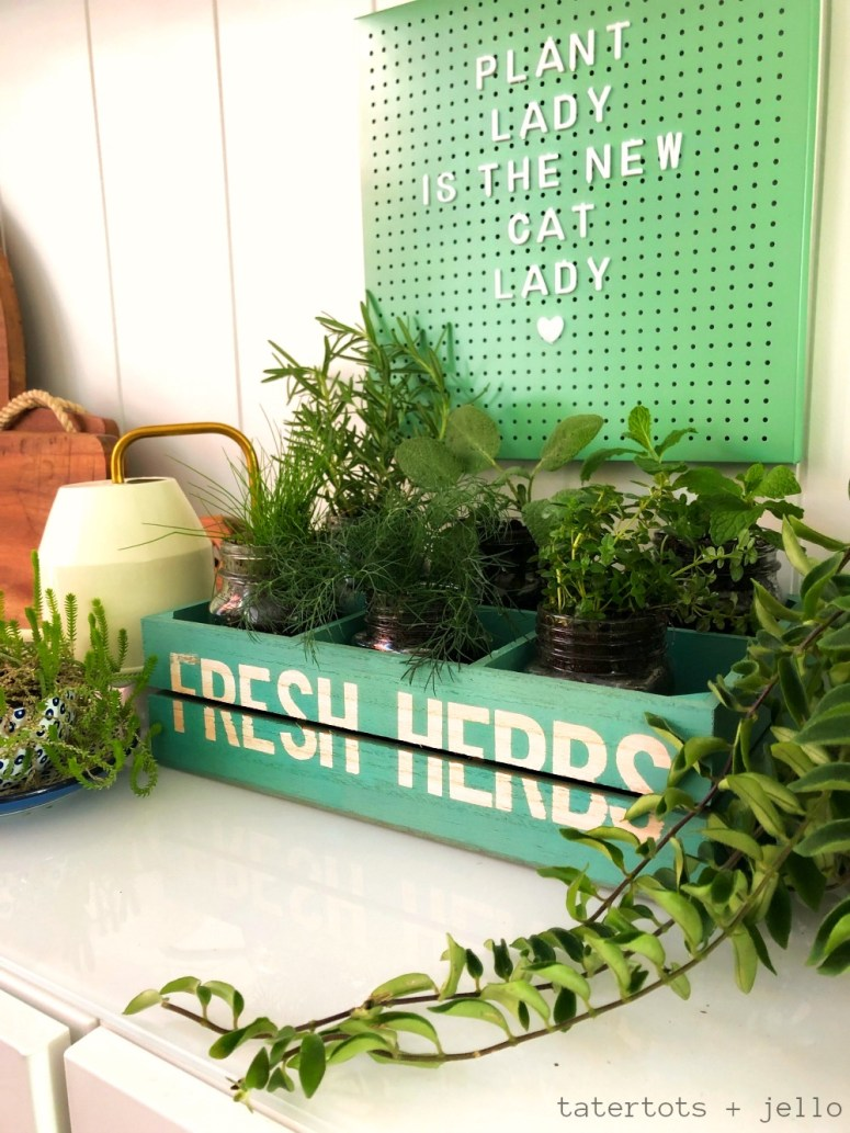 Inexpensive and Easy Kitchen Herb Garden DIY. Grab a few dollar section items and create a kitchen herb garden that you can enjoy all year long!