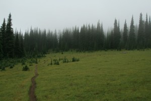 One of the first meadows we walked through, on our way to Bear Creek Mtn.