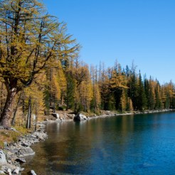 I've seen a lot of larch, but the trees around the Golden Lakes Loop are some of the biggest I've ever seen, and in such abundance!
