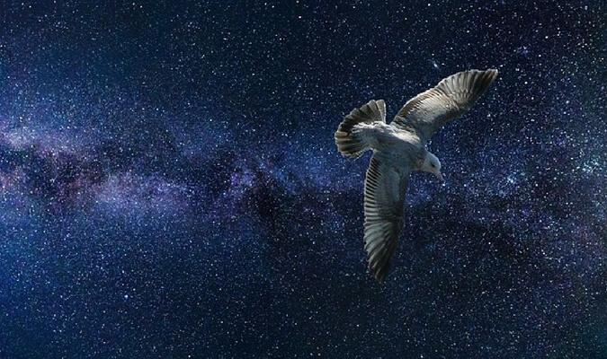 Птица-душа