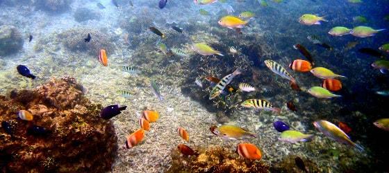 boracay-island-reef-phillipines