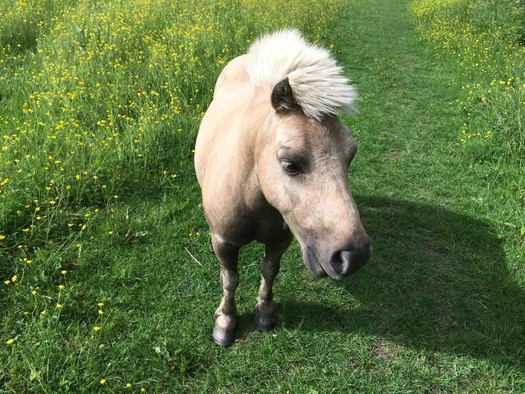 A cute little pony