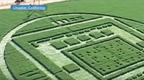 Elaborate crop circle draws crowds in California