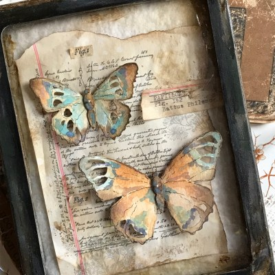 A Collection of Tattered Butterflies