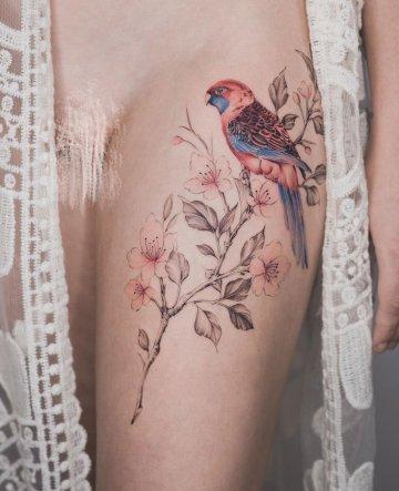 Crimson Rosella & Cherry Blossom