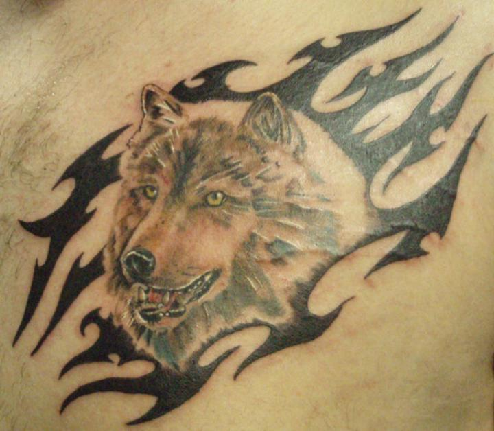 Wolf and tribal tattoo on chest for men