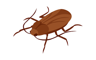 Cockroach Tattoo Ideas