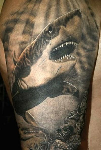 Фото тату у парня на плече - акула