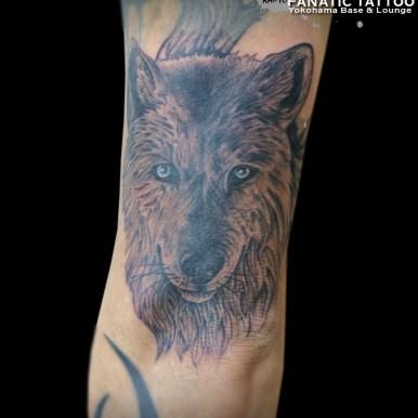 オオカミ wolf
