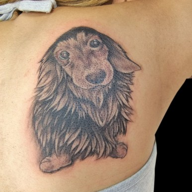Dachshund dog ダックスフント 犬