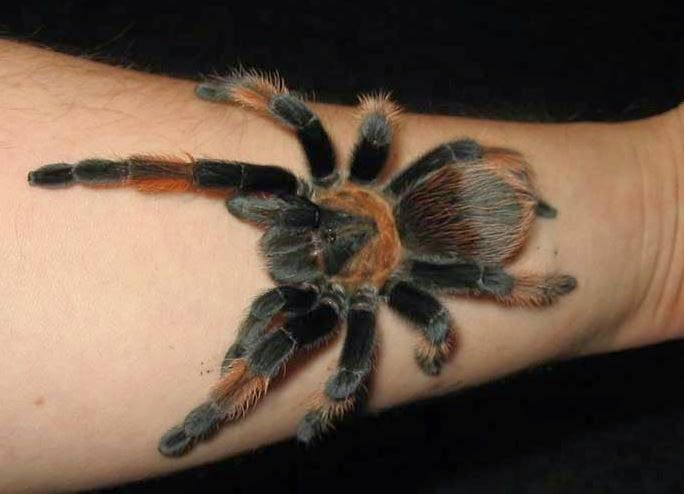 51 Best Spider Tattoos Designs And Ideas Design A Tattoo Ideas And Designs