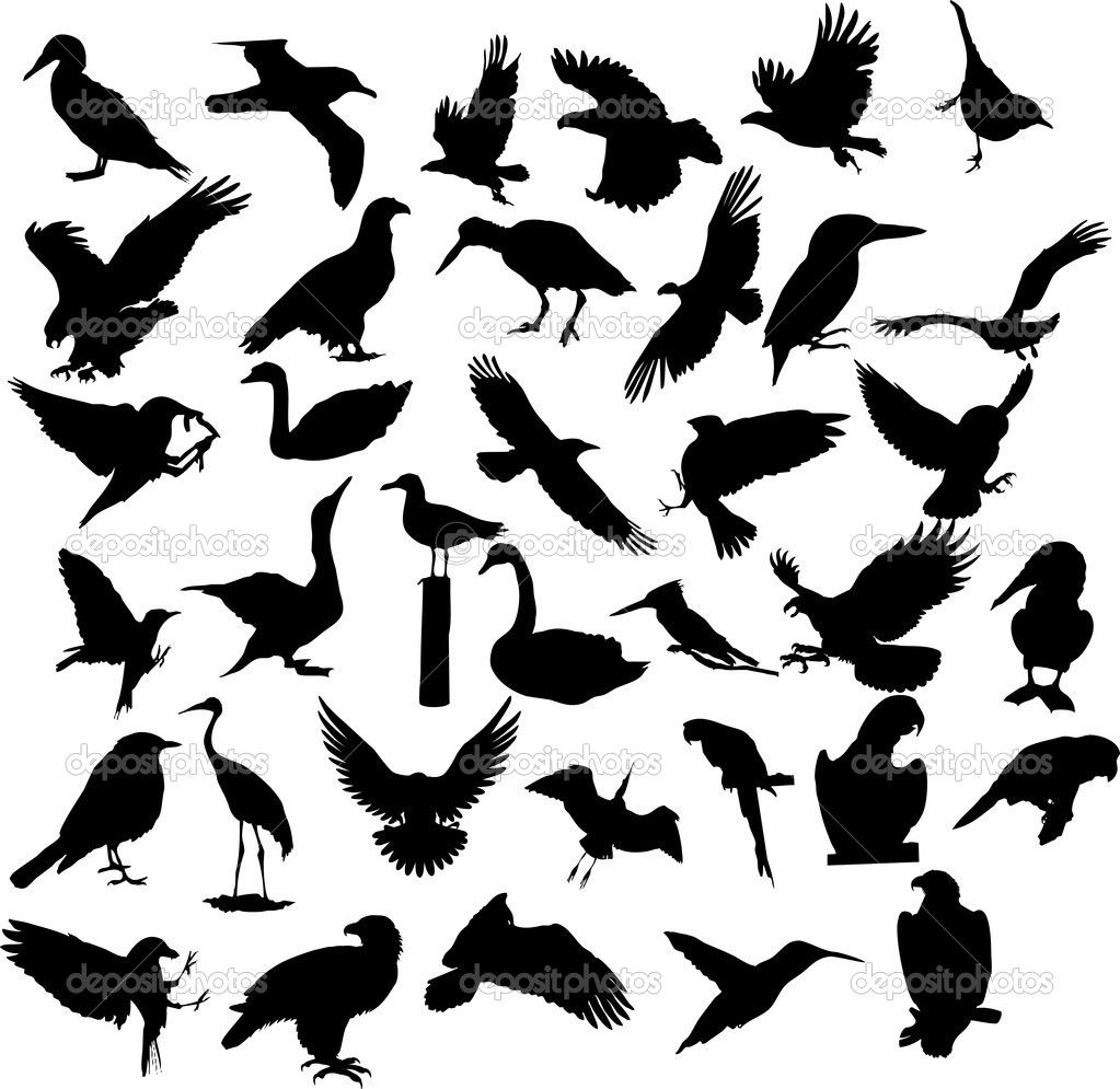 Pin By Jenice Emord Godley On Tattoos Bird Silhouette Ideas And Designs