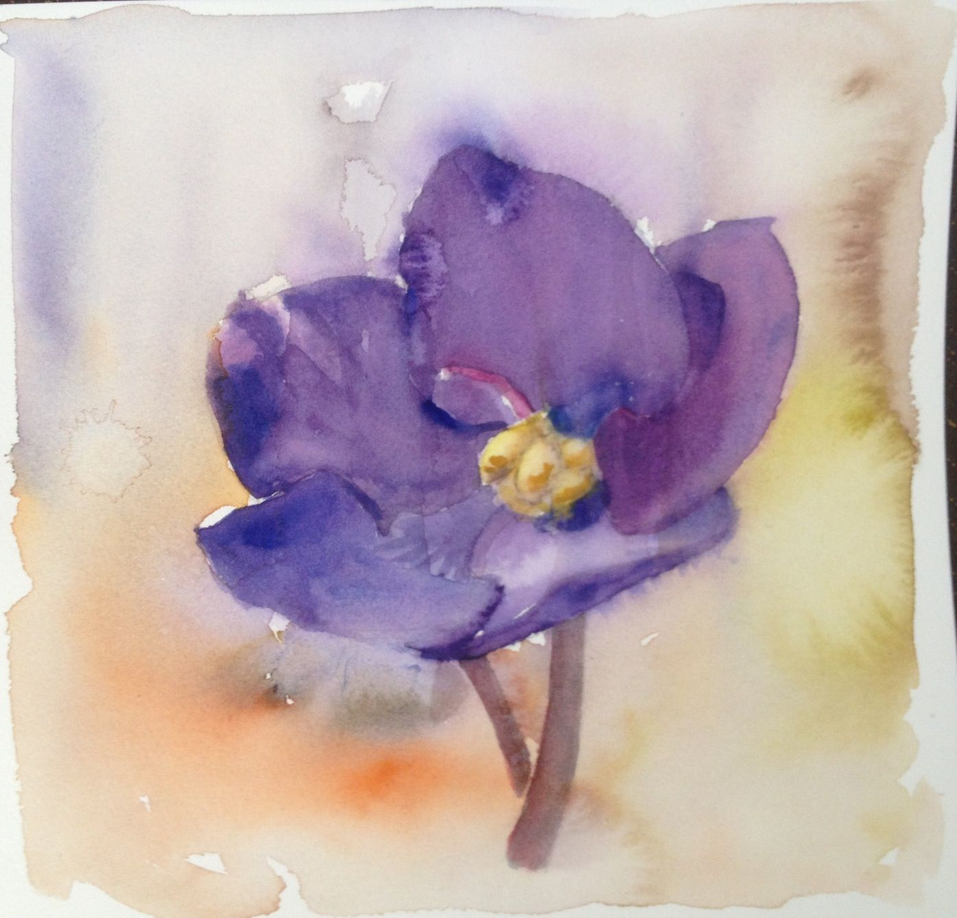 Watercolor African Violet Ink Pinterest Violets Ideas And Designs