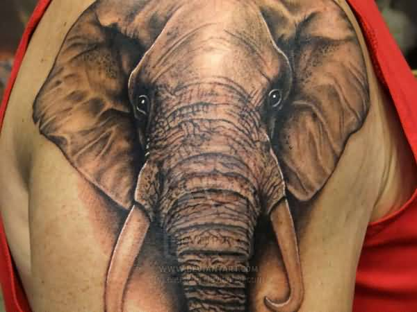 50 Mind Blowing African Elephant Tattoo Art Ideas And Designs