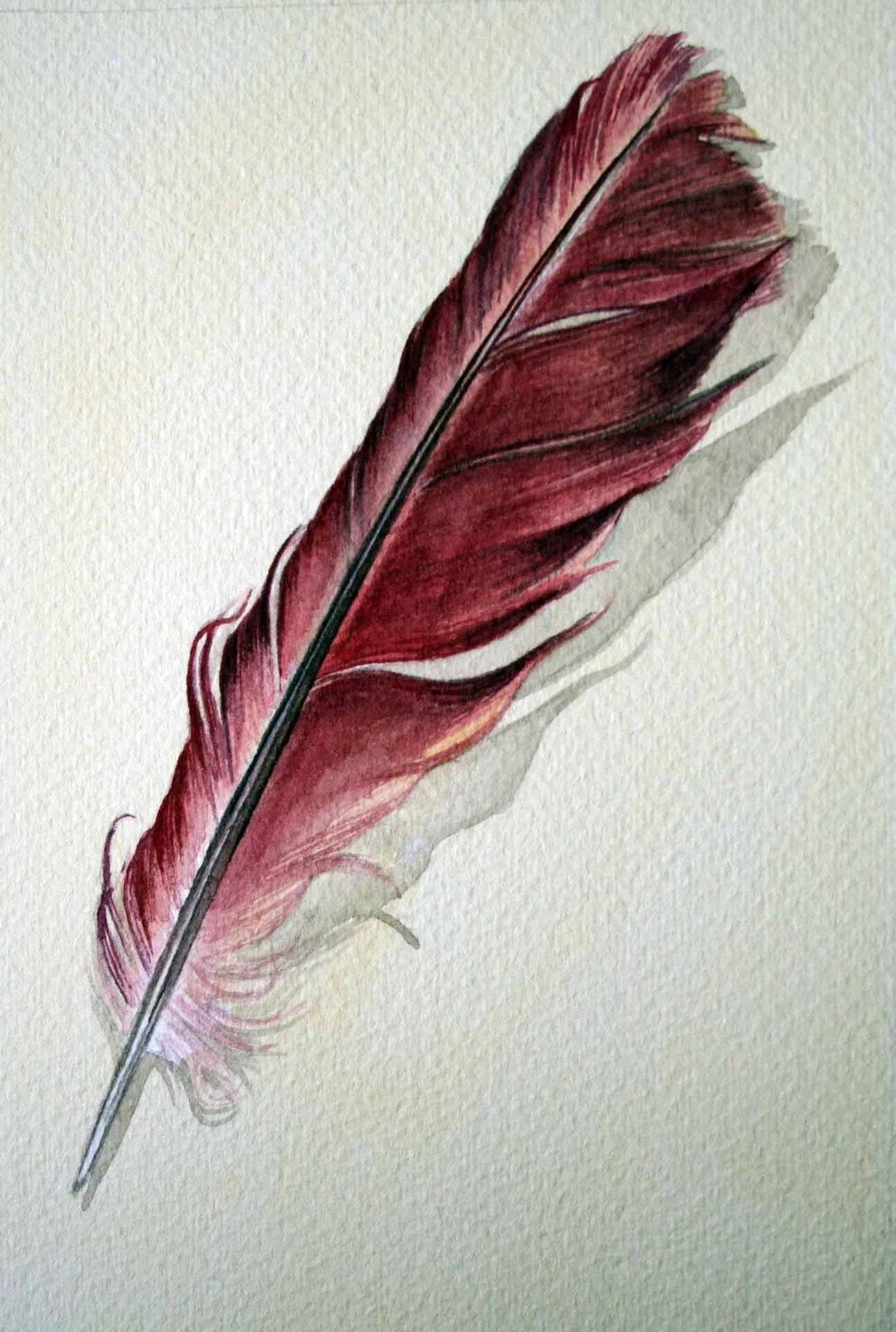 Feather 113 Cardinal Feather Original Watercolour Ideas And Designs
