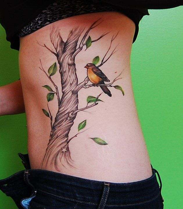 41 Best Images About Sas On Pinterest Trees A Tree And Ideas And Designs