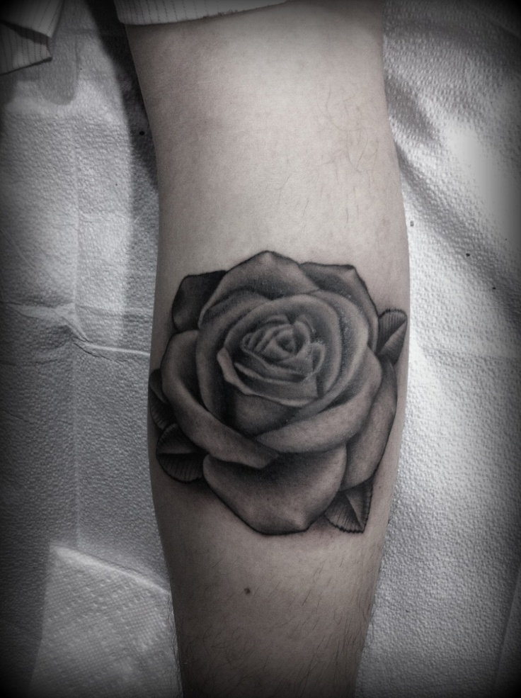 Black And Grey Rose Do Purple Shades With Grey Leaves Ideas And Designs