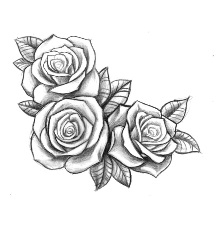 25 Best Ideas About 3 Roses Tattoo On Pinterest Rose Ideas And Designs