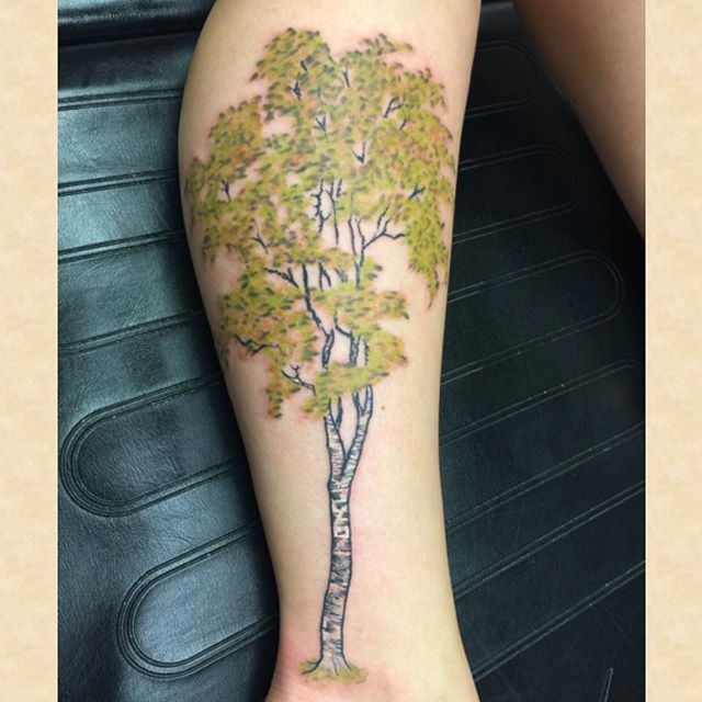 1000 Ideas About Birch Tree Tattoos On Pinterest Maple Ideas And Designs