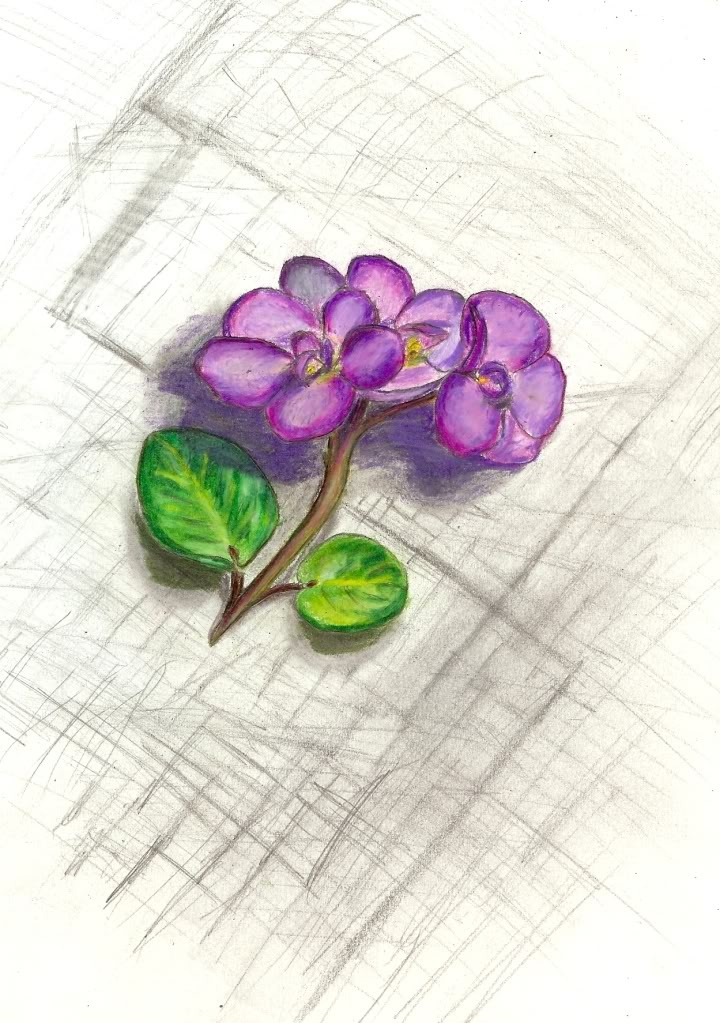 African Violet Ideas And Designs