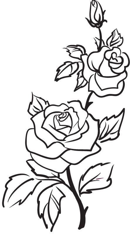 Best 25 Rose Outline Ideas On Pinterest Simple Rose Ideas And Designs