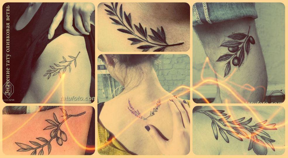 значение тату оливковая ветвь смысл история фото эскизы рисунков
