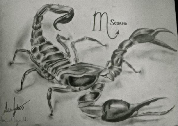 Тату Скорпион | 39 фото и эскизов татуировки | Рисунки на ...