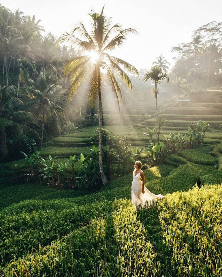 Tegalalang Rice Terrace Ubud Indonesia - Arecales, Morning, Outdoor structure, People in nature, Person, Plant, Sunlight, Tree