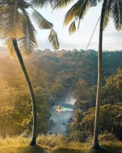 Ubud, Karangasem Bali Indonesia - Arecales, Forest, Natural environment, Nature, Nature reserve, Outdoor structure, Sunlight, Terrestrial plant, Tree, Vegetation, Woody plant