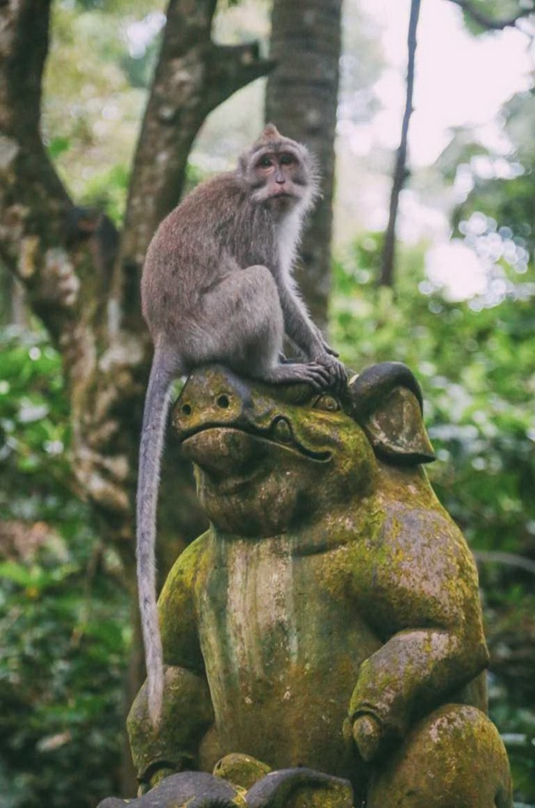 Monkey Forest Ubud Indonesia - Branch, Macaque, Monkey, Outdoor structure, Primate, Sculpture, Snout, Temple, Terrestrial animal, Vertebrate
