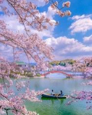 Habu Park, Fukuoka Japan - Bank, Blue, Boat, Boats and boating--Equipment and supplies, Body of water, Botany, Branch, Cloud, Daytime, Flower, Lake, Natural landscape, Person, Plant, Sky, Tree, Vegetation, Vehicle, Water, Watercourse, Watercraft, Woody plant