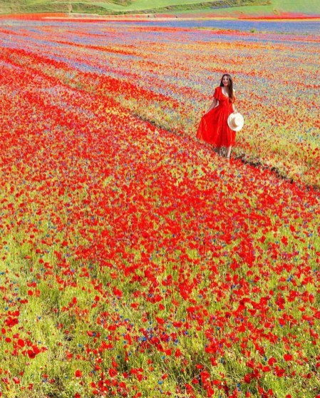 Norcia, Perugia Italy - Botany, Dress, Ecoregion, Flower, Grass, Nature, People in nature, Person, Petal, Plant, Red