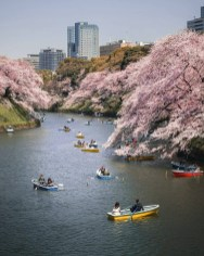 Chiyoda, Tokyo Tokyo Prefecture Japan - Bank, Boat, Boats and boating--Equipment and supplies, Body of water, Building, Flower, Lake, Nature, Plant, Sky, Skyscraper, Tree, Vehicle, Water, Watercourse, Watercraft