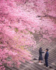 Tokyo, Japan - Botany, Flower, People in nature, Person, Pink, Plant, Tree