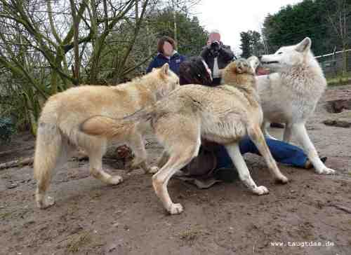 Wolfsseminar