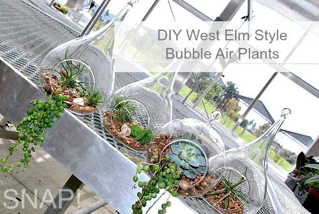 DIY West Elm Style Bubble Air Plants
