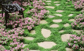 16 Ground Cover Perennials To Try Out In Your Yard This Season pertaining to 14 Some of the Coolest Ideas How to Makeover Backyard Ground Cover Ideas