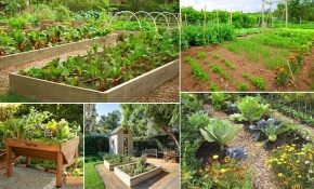 50 Fantastic Backyard Vegetable Garden Ideas Bloom And Grow for 13 Clever Concepts of How to Improve Gardening Ideas For Backyard