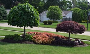 A Wonderful Backyard Landscaping Idea Use These Trees Youtube intended for Trees For Backyard Landscaping