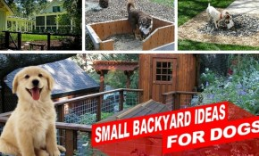 Amazing Small Backyard Ideas For Dogs Youtube pertaining to 14 Clever Ideas How to Craft Dog Backyard Ideas