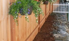 Best 10 Backyard Privacy Fence Landscaping Ideas On A Budget regarding 15 Genius Concepts of How to Make Backyard Fence Landscaping Ideas
