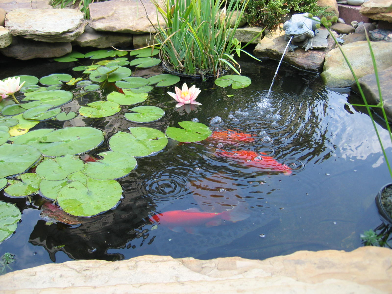 Delightful Backyard Fish Pond Landscape Design With Small Water pertaining to 14 Genius Concepts of How to Upgrade Small Backyard Pond Ideas