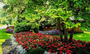 Shade Garden Plans Better Homes Gardens with Shady Backyard Landscaping Ideas