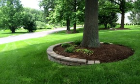 Trees For Backyard Landscaping 14287 pertaining to 10 Some of the Coolest Concepts of How to Improve Trees For Backyard Landscaping