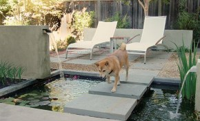 8 Backyard Ideas To Delight Your Dog Huffpost throughout Backyard Ideas For Dogs