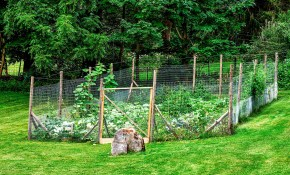 Great Garden Fence Ideas For 2017 How To Build A Garden Fence regarding Backyard Garden Fence