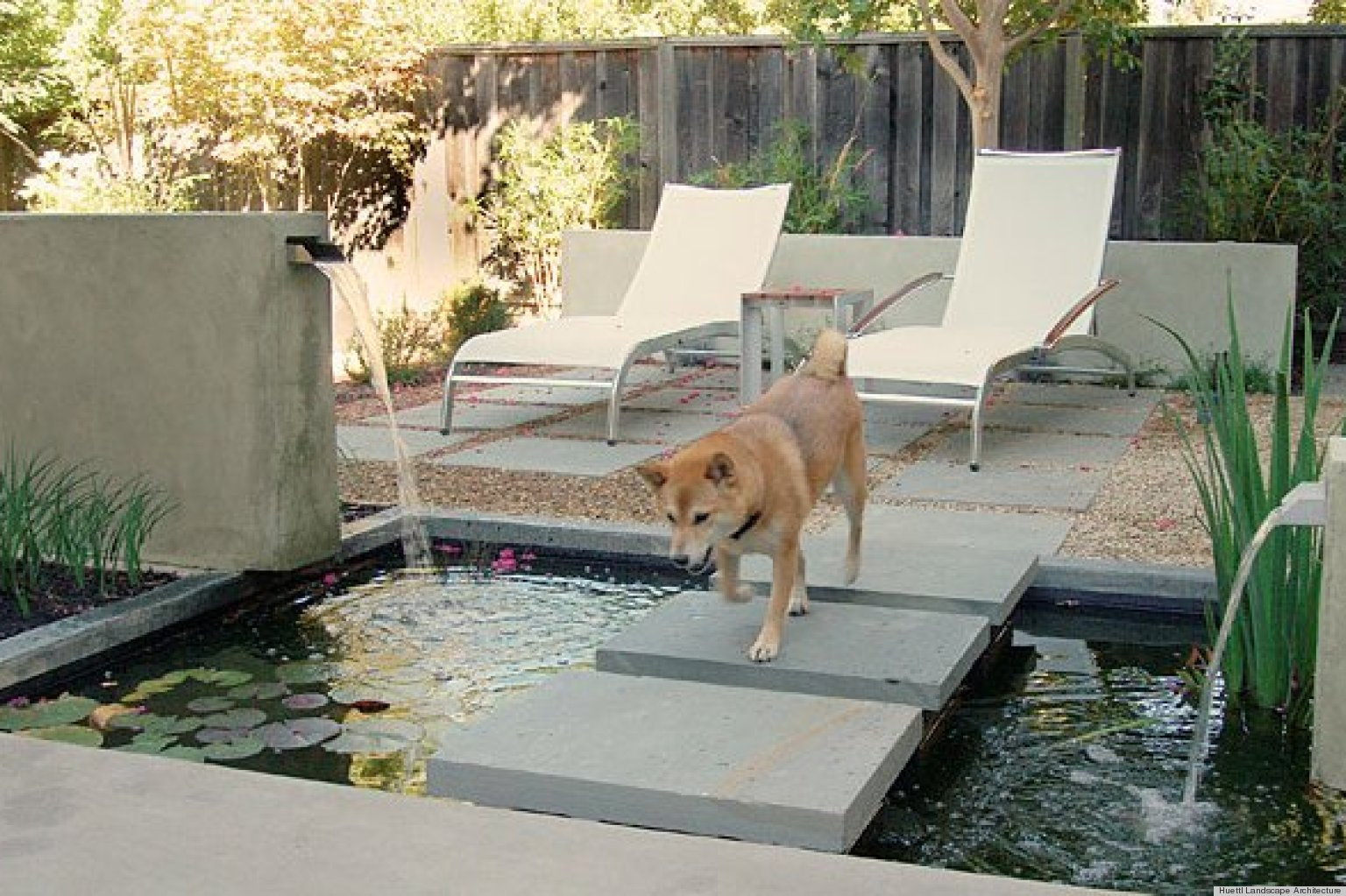 8 Backyard Ideas To Delight Your Dog Huffpost with regard to Landscaping Ideas For Backyard With Dogs